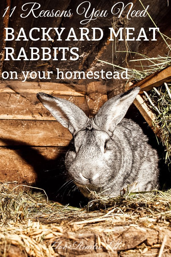 11 Reasons You Need Backyard Meat Rabbits (With images ...