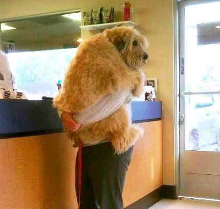Scared puppy at the vet!