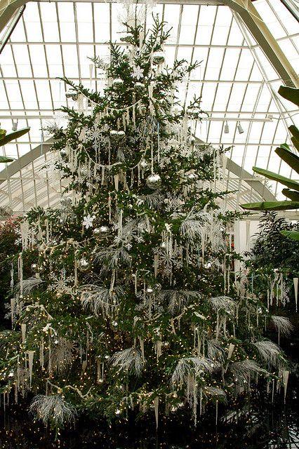 christmas tree Christmas tree, Holidays and Wonderful time