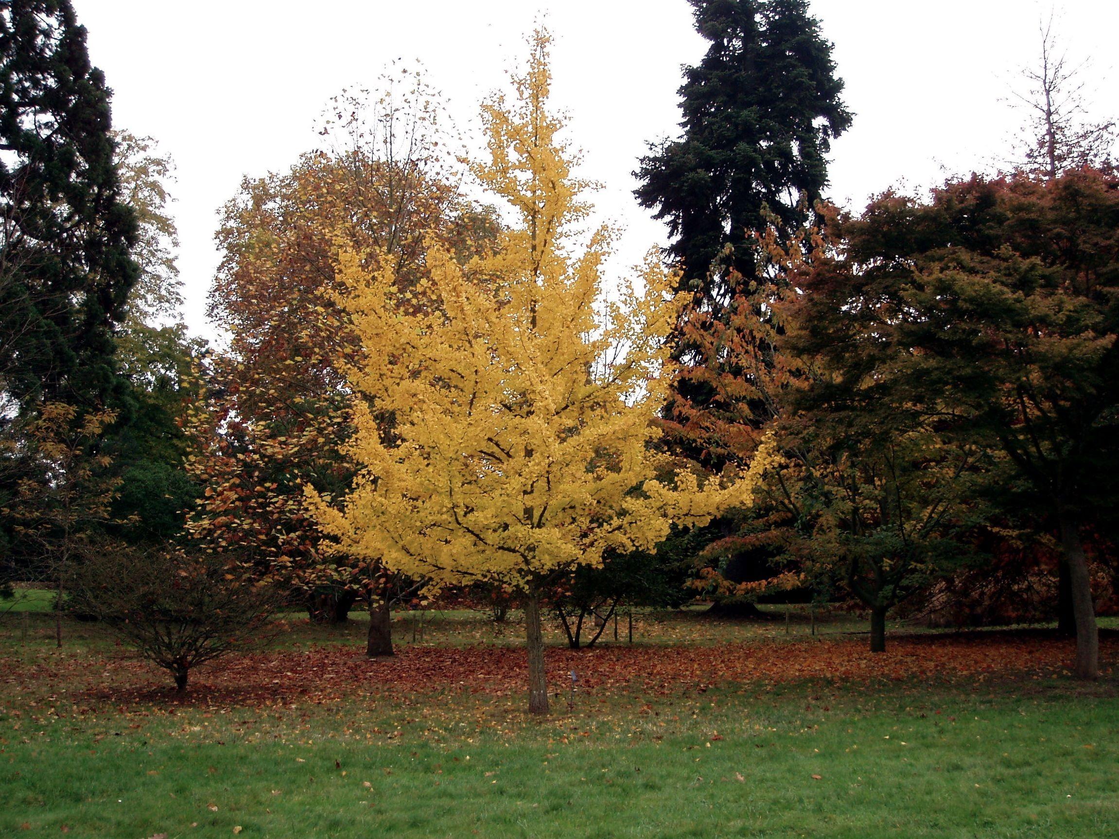 Garden landscape trees   Favorites WindResistant Trees  Gardens and Garden ideas