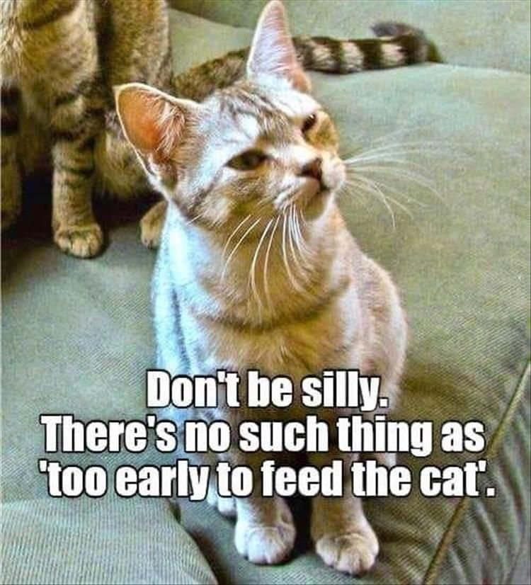 Funny Animal Pictures 26 Pics Cat Quotes Funny Cute Funny Animals Funny Cat Memes
