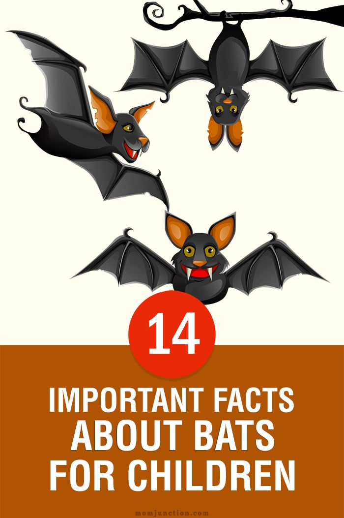14 Important Facts And Information About Bats For Kids Bat Facts Bat Activities For Kids Bats For Kids