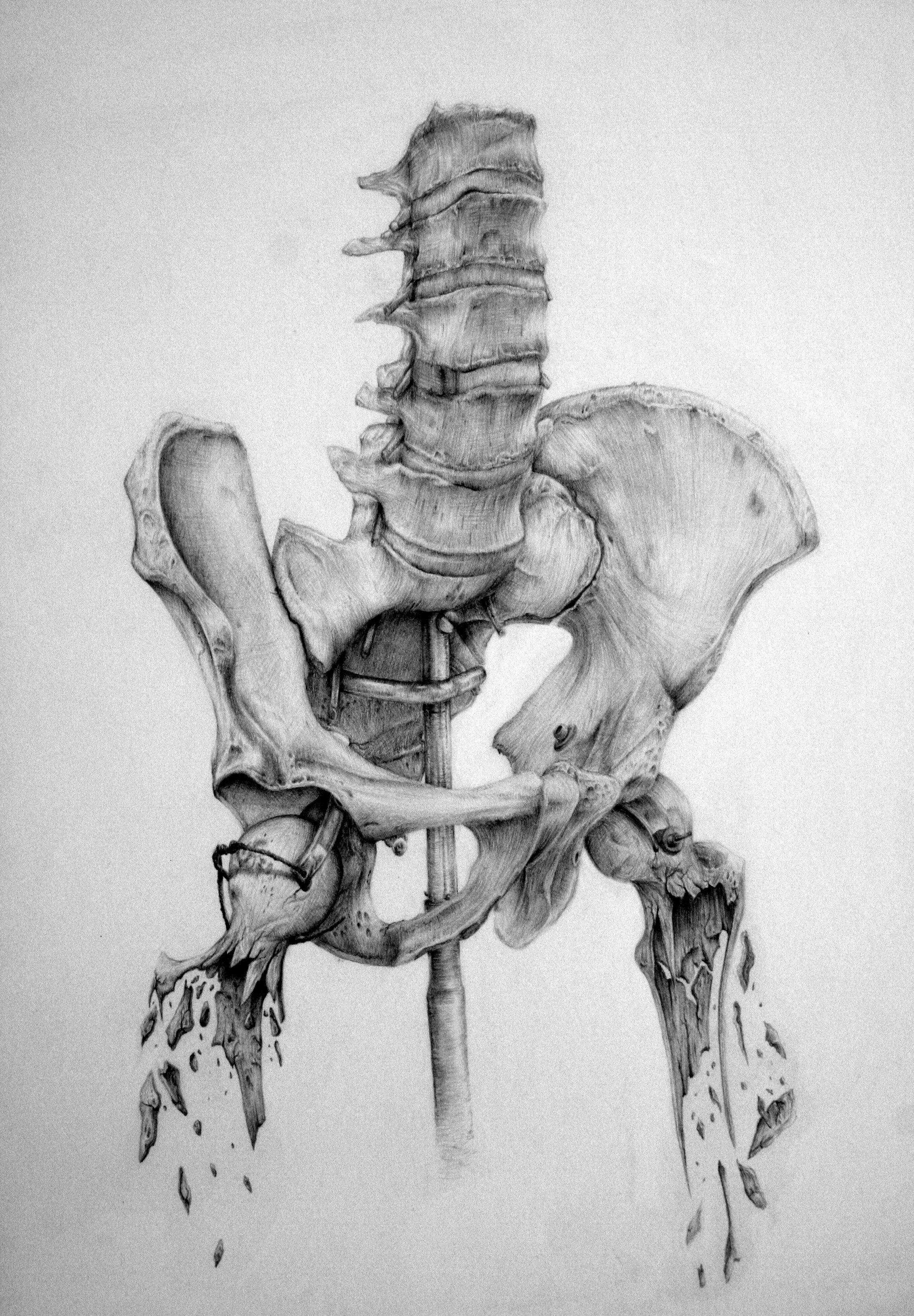 Anatomy - skeleton/hip | Anatomia | Pinterest | Anatomía ...