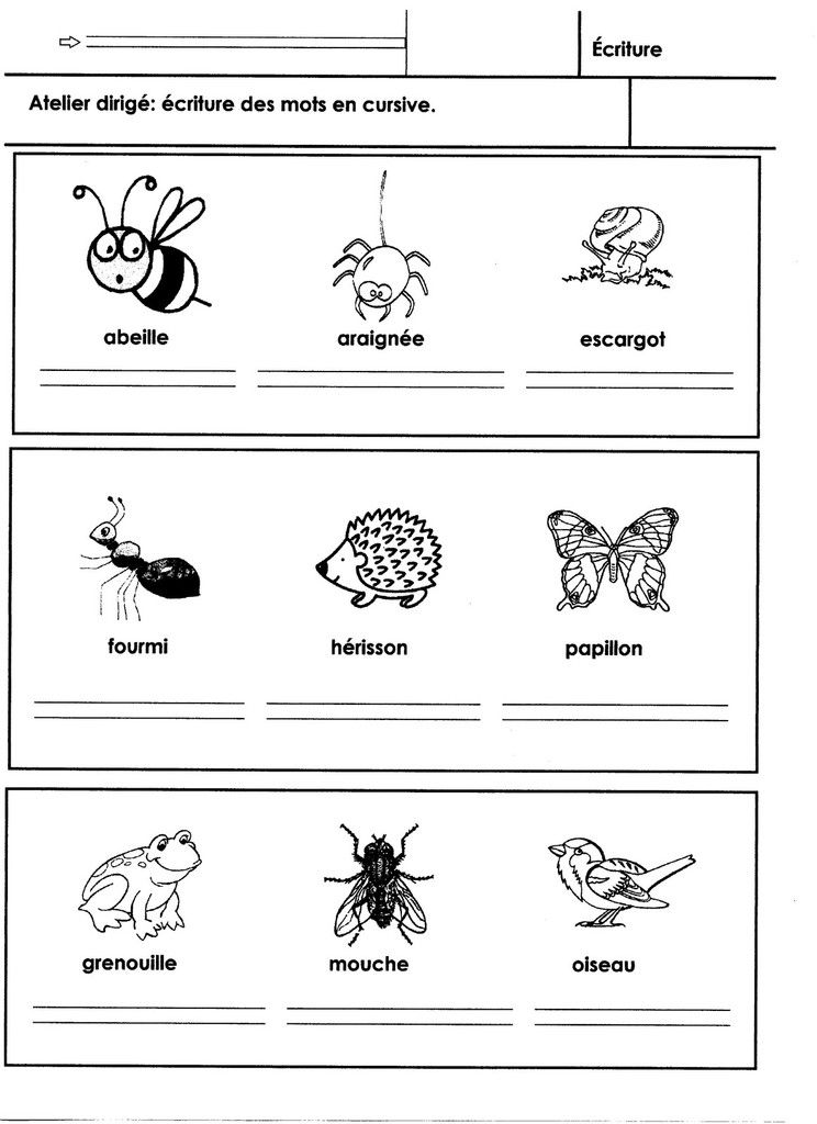 Les Animaux Du Jardin Ecriture Avec Images Animaux Ecriture