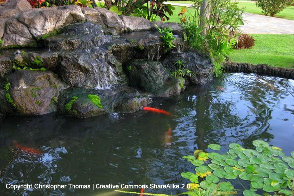 12 24 V Medium Output Solar Water Pump Kit Silicon Pond Waterfall Koi Pond Pond Fountains