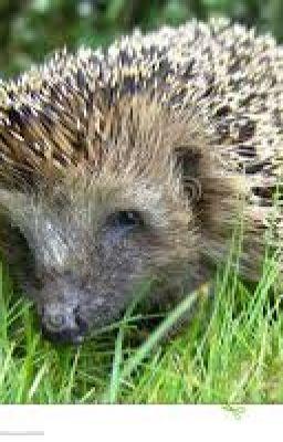 Hedgehog's New Wings