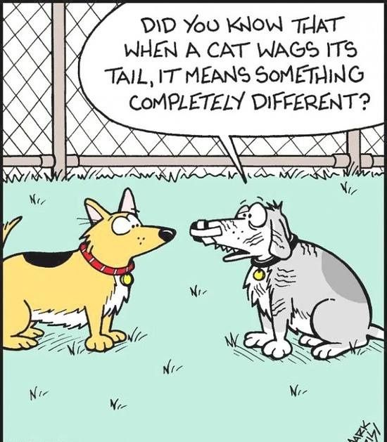 Dog Cat Tail Wag Cartoon Cartoon Jokes Funny Cartoons Jokes