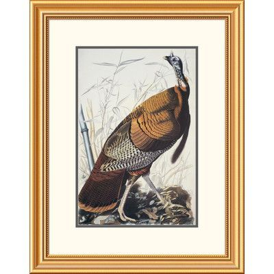"""Global Gallery Wild Turkey by John James Audubon Framed Painting Print Frame Color: Academie Black with Gold, Size: 40"""" H x 30"""" W x 1.5"""" D"""