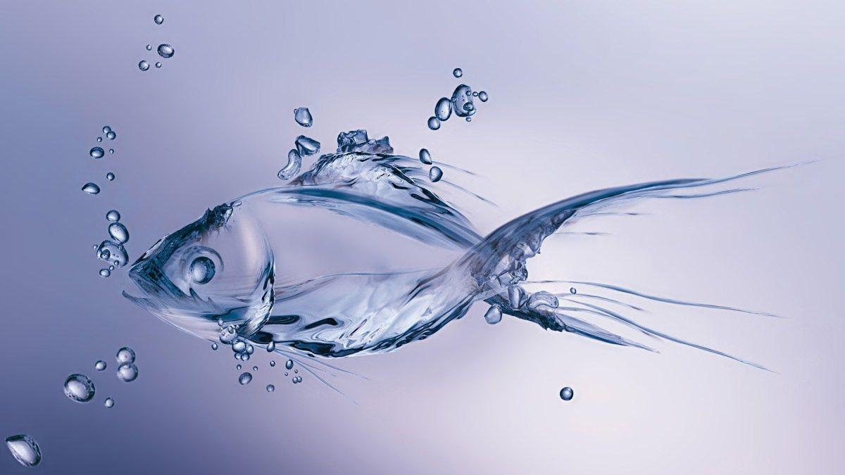 Wallpaper Beautiful Fish Water Creative Abstract Water Art Fish Wallpaper Fish