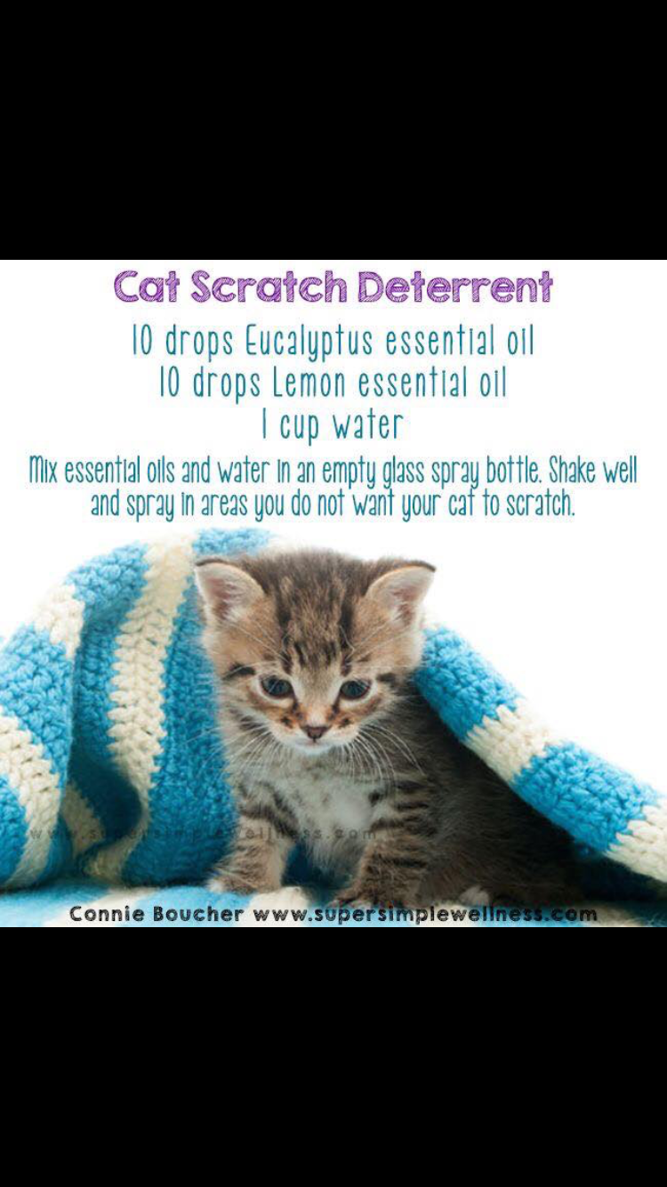 Pin By Kimmily Wheeler On Essential Oils Essential Oils Cats Cat Training Cat Essentials