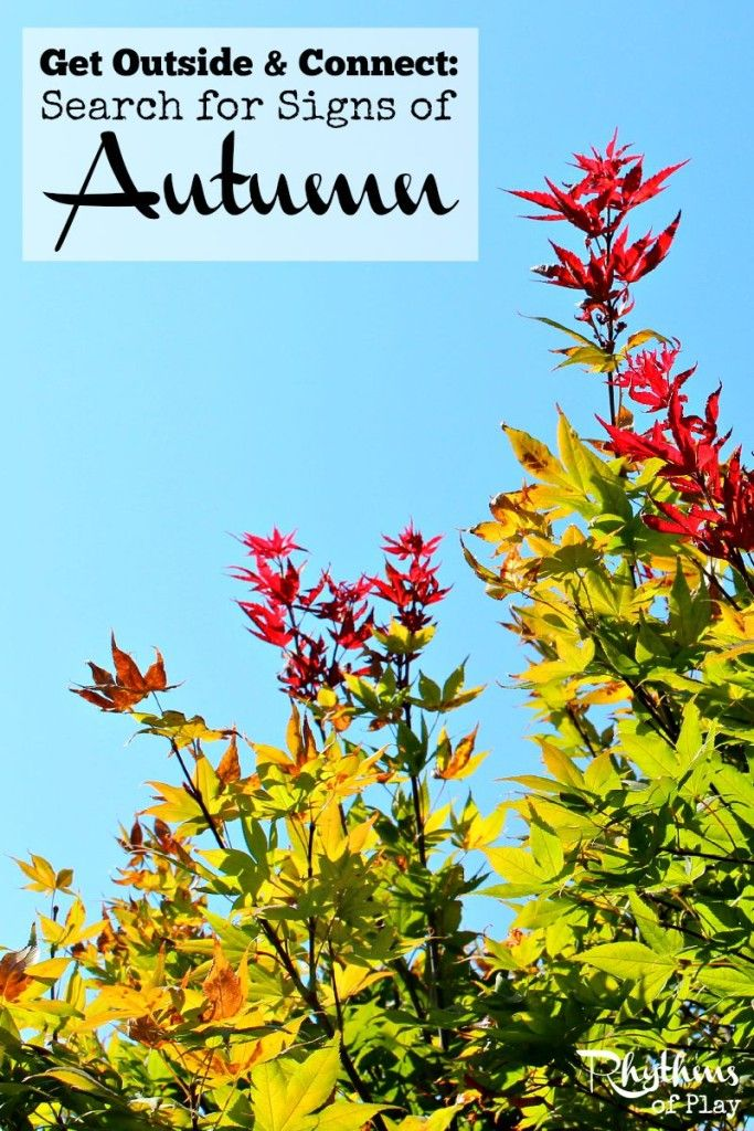 Search for Signs of Autumn -- If you look carefully you can see that fall is quickly approaching. It's a great time to get outside and enjoy nature's seasonal sights.