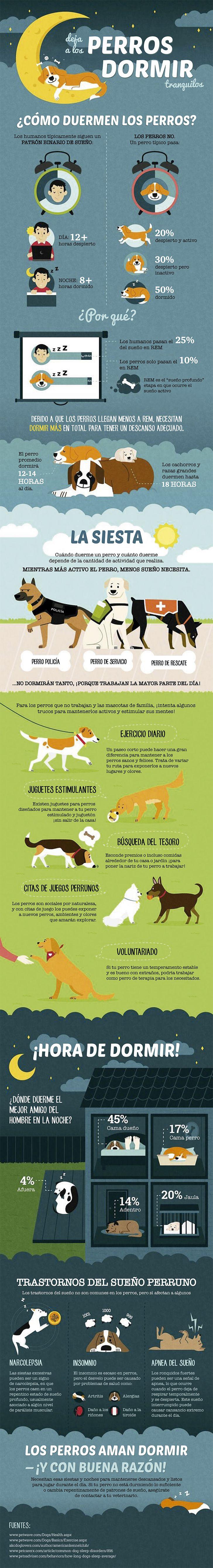 Photo of Algunos datos sobre el sueño de los perros que debes saber