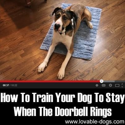 How To Train Your Dog To Stay When The Doorbell Rings ►► lovable-dogs.com/...