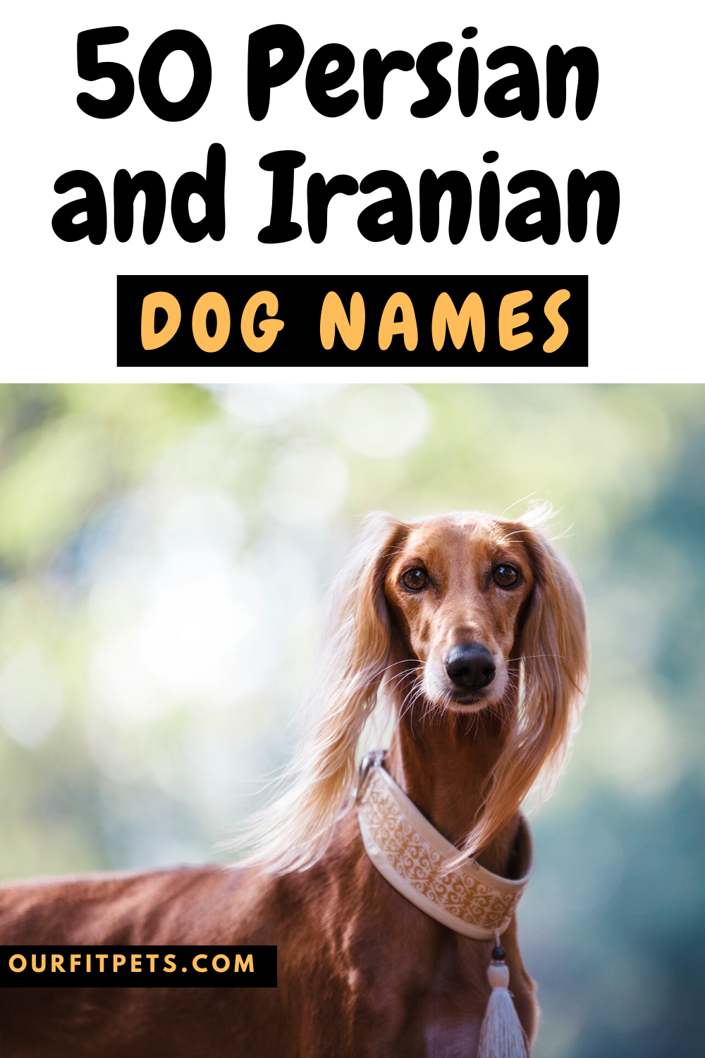 50 Persian And Iranian Dog Names Our Fit Pets In 2020 Dog Names Ancient Persia Persian