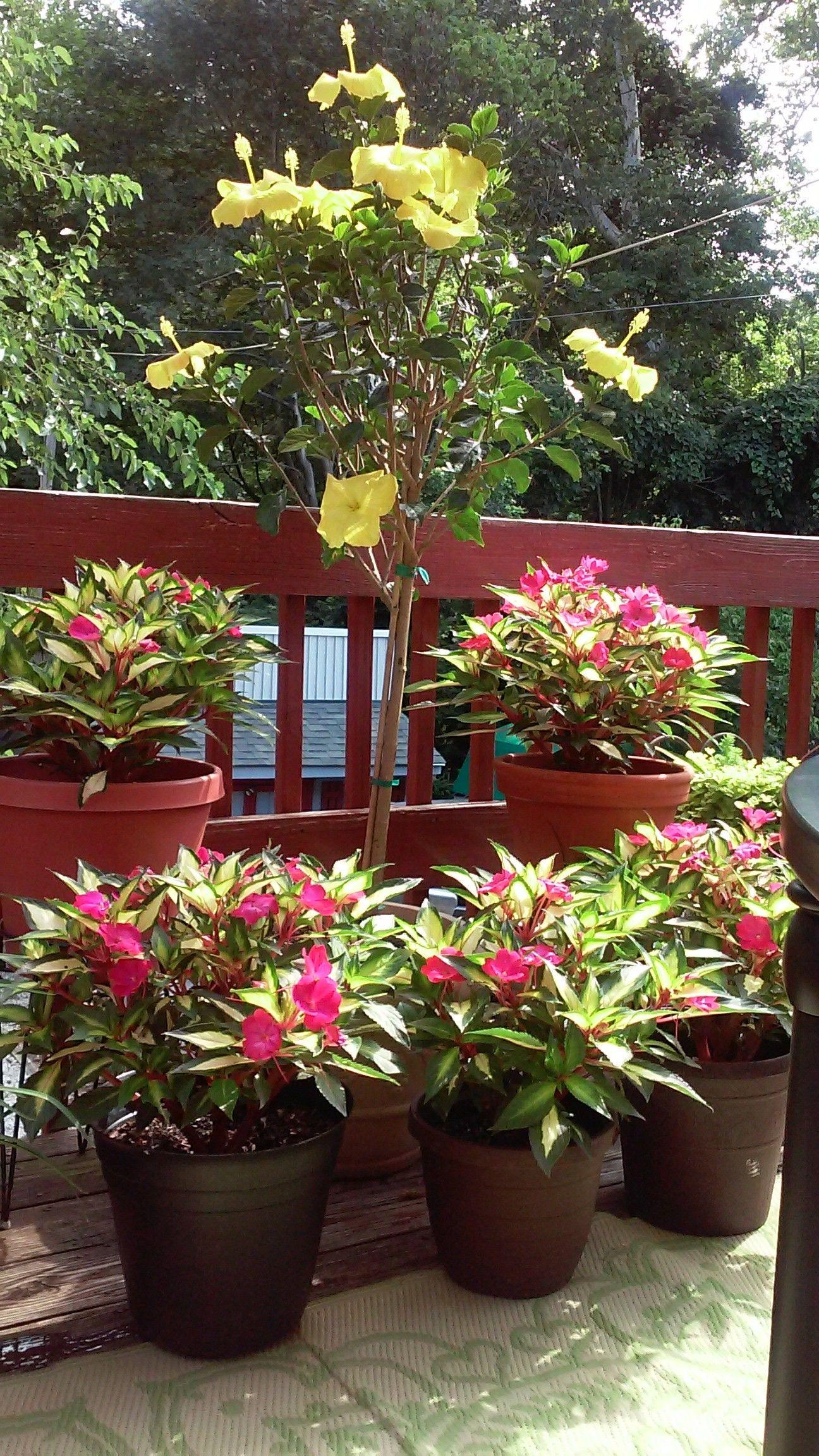 Garden Plants Qvc
