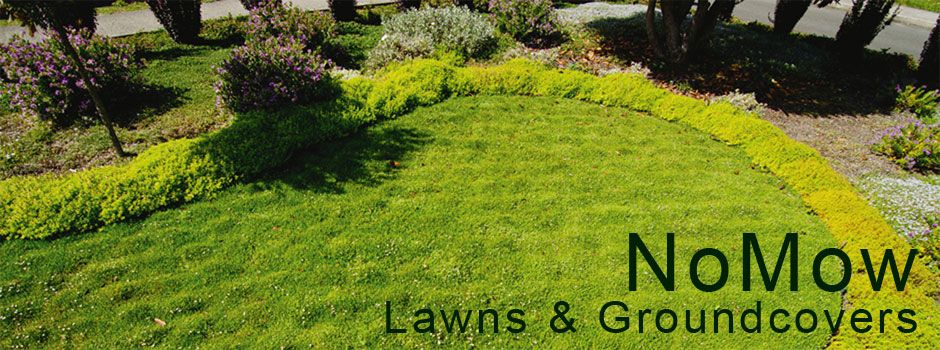 no mow ground cover plants for landscaping