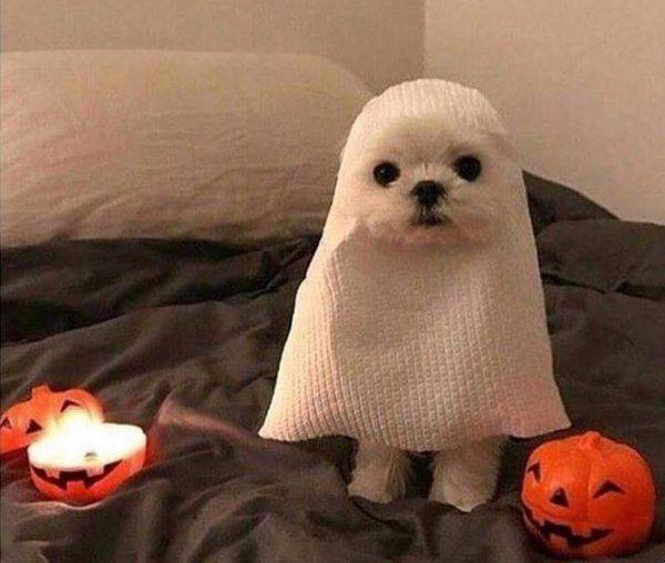 Photo of Listo para halloween