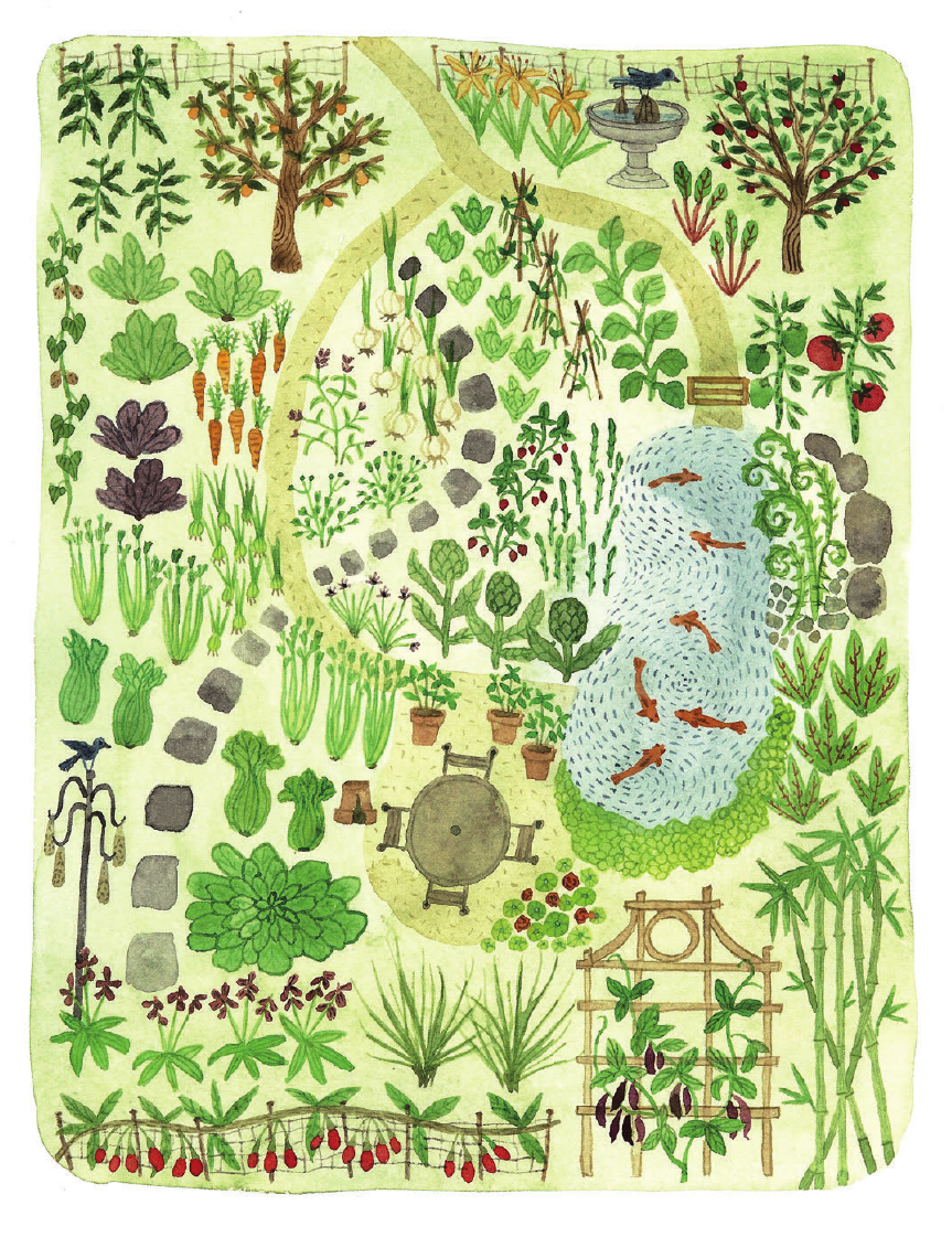 Garden layout design illustration from The Wildlife Friendly