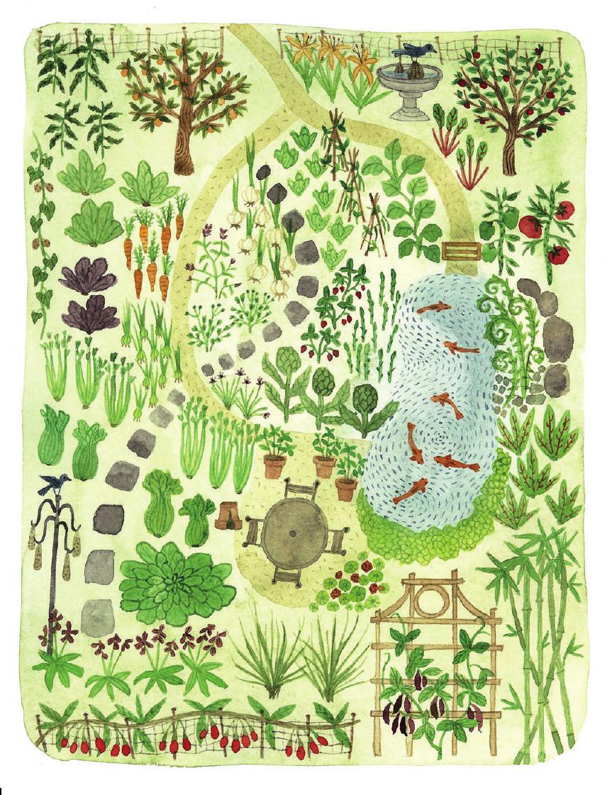 Garden Layout Design Illustration From The Wildlife Friendly Vegetable Gardener Book Garden Design Layout Garden Layout Vegetable Vegetable Garden Design