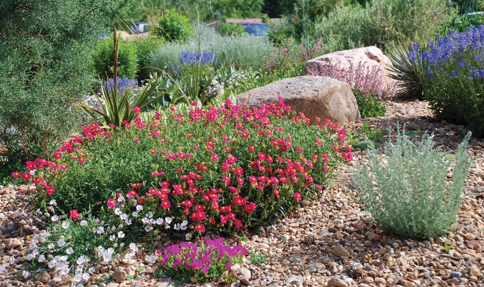 Colorful flowers xeriscape front yard xeriscape texas for Garden design xeriscape