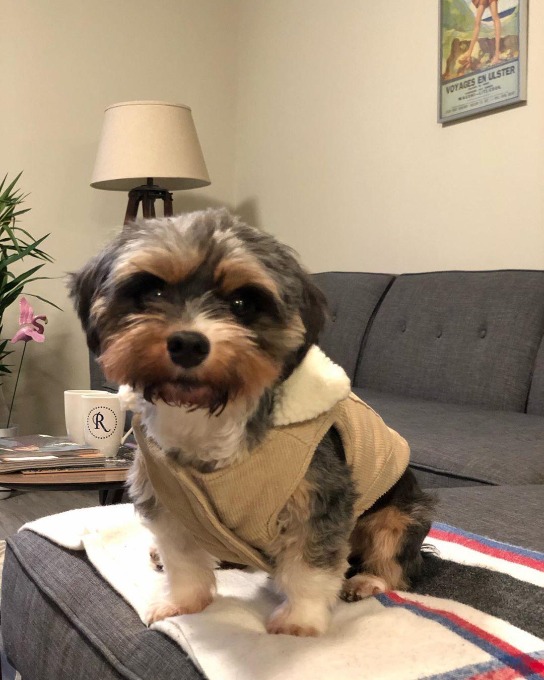Are Y All Ready For Fall Autumn Newlook Fashion Dogfashionista Luna Shihtzu Dachshund Dog Dogs Dogsofinstagram Westne Dogs Dachshund Shih Tzu