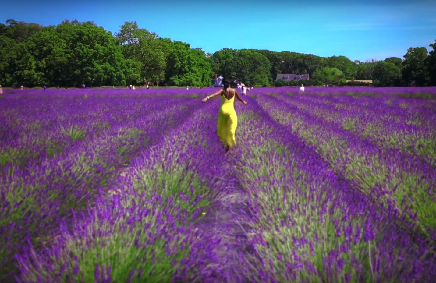 """""""Travelista Teri"""" takes a trip to a Lavender Farm on Long Island, NY in my article """"Escapade!!! Cyber Traveling with 'Travelista Teri', to Lavender by the Bay, Long Island"""