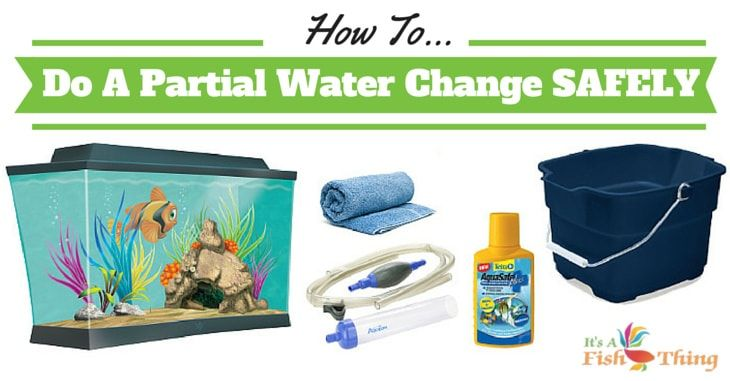 How to Change Aquarium Water - Quickly and Safely for Your ...