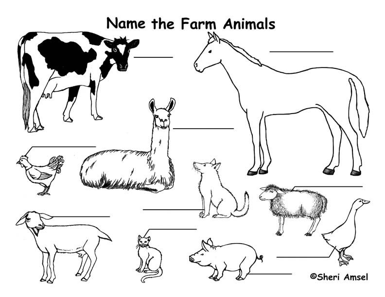 Farm Animals Farm Animal Coloring Pages Zoo Animal Coloring