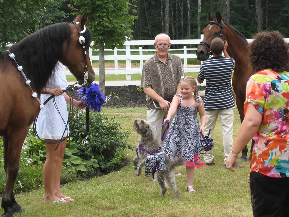 Garden party wedding: Morgan mare was maid of honor, her son, a 20+ year old Morgan gelding, was best man and a rescued/adopted mini- Schnauzer cross was the ring bearer!  from Petr Lord, JP.
