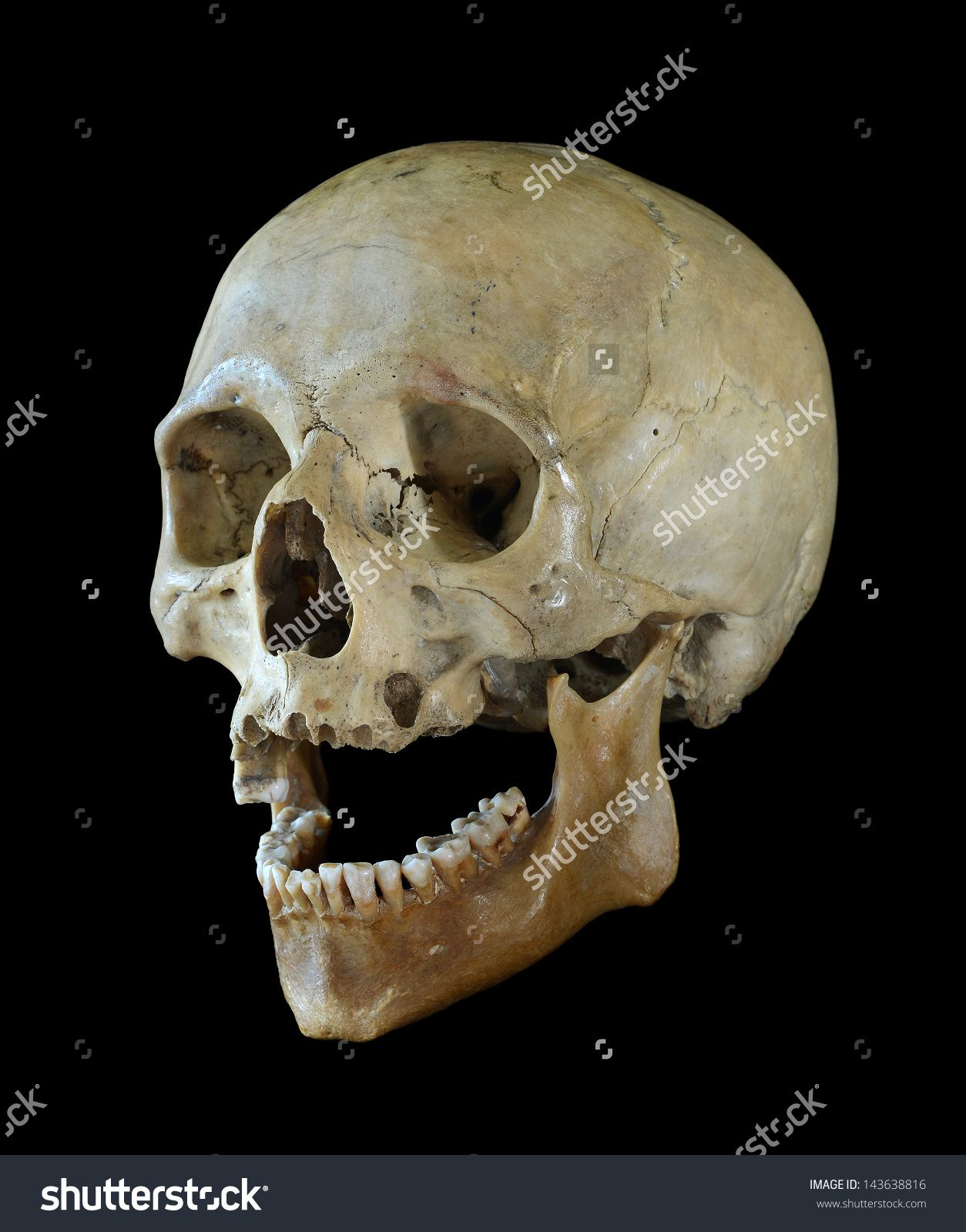 Human Skull Human Skull Isolated On A Black Background Стоковые