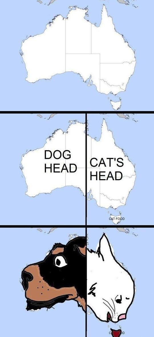 Dog And Cat Face In Australia #funnyphotos