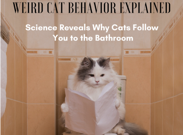 Weird Cat Behavior Explained Science Reveals Why Cats Follow You To The Bathroom Cats And Meows Cat Behavior Crazy Cats Cats
