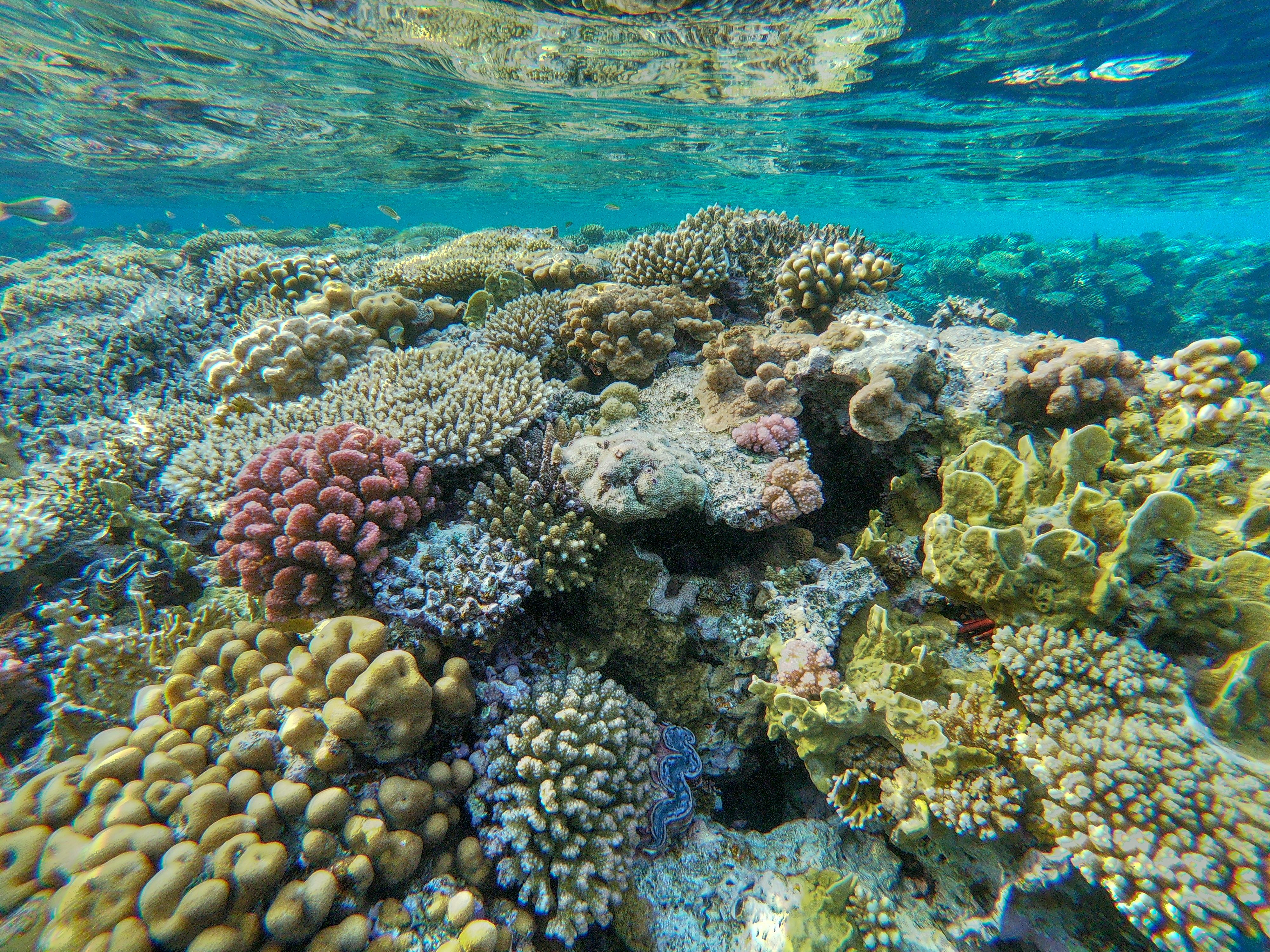 Coral reef, Sharm El Sheikh, Egypt (With images ...