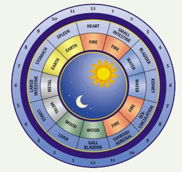 I like this circadian rhythm chart a lot too circadian rhythm
