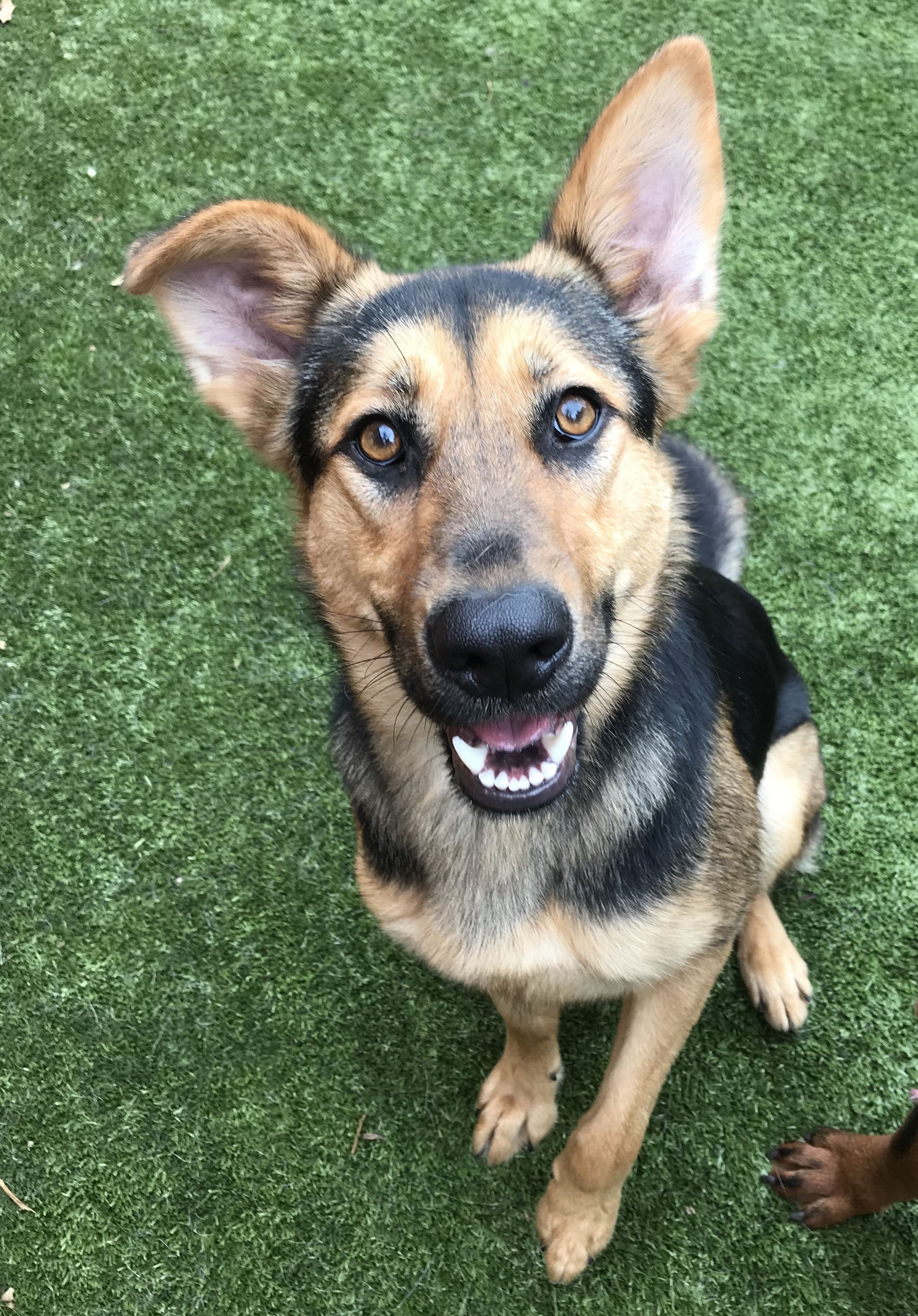 Adopt Adrian on Dogs, Dog search