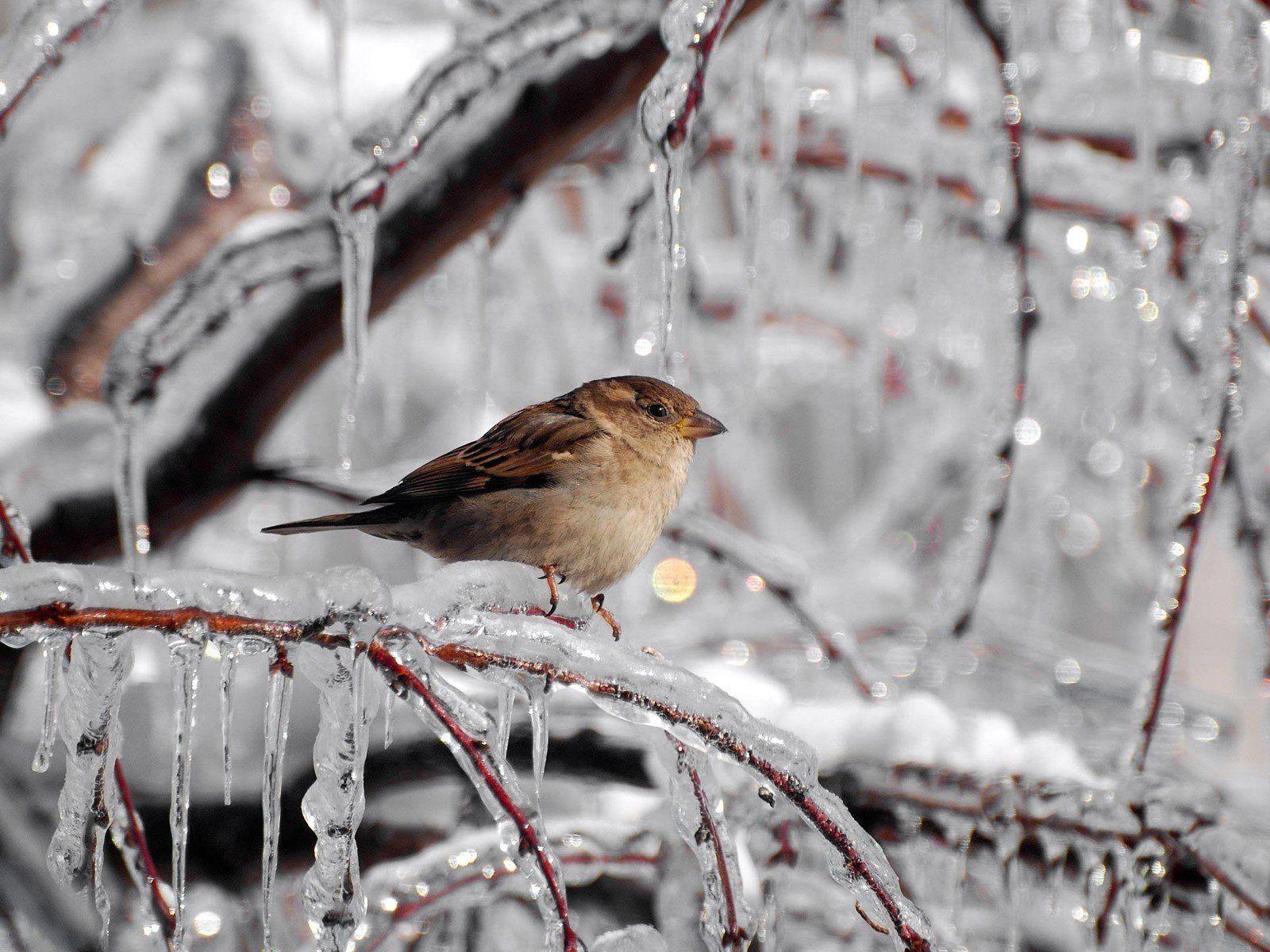 Winter Ice Cute Birds Winter Bird Cute Wallpapers