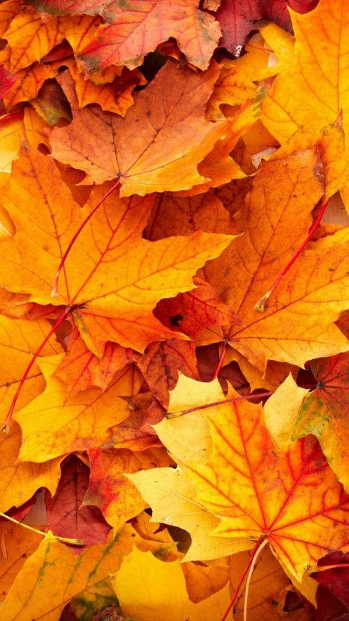 Best Wallpapers For Iphone 6 With High Resolution Fall