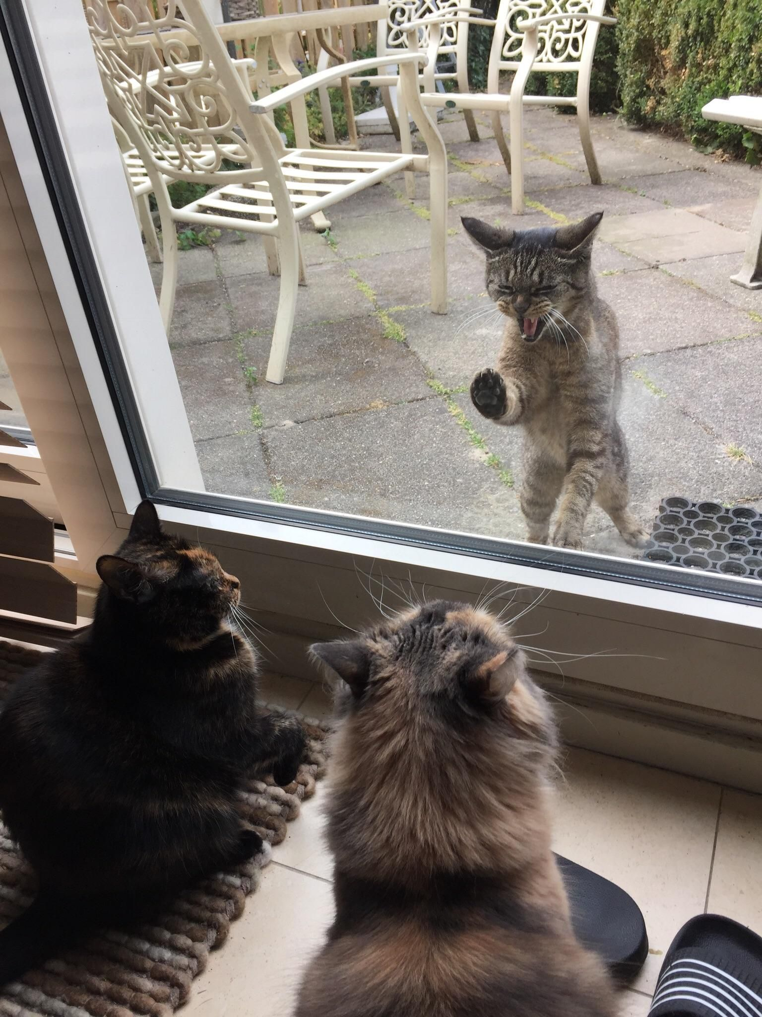 We Had A Visitor Hello There Bright People Are You Catlover Or Have You Any Pretty Cats I Think You Love A Kitty F Cat Having Kittens Baby Cats Cats