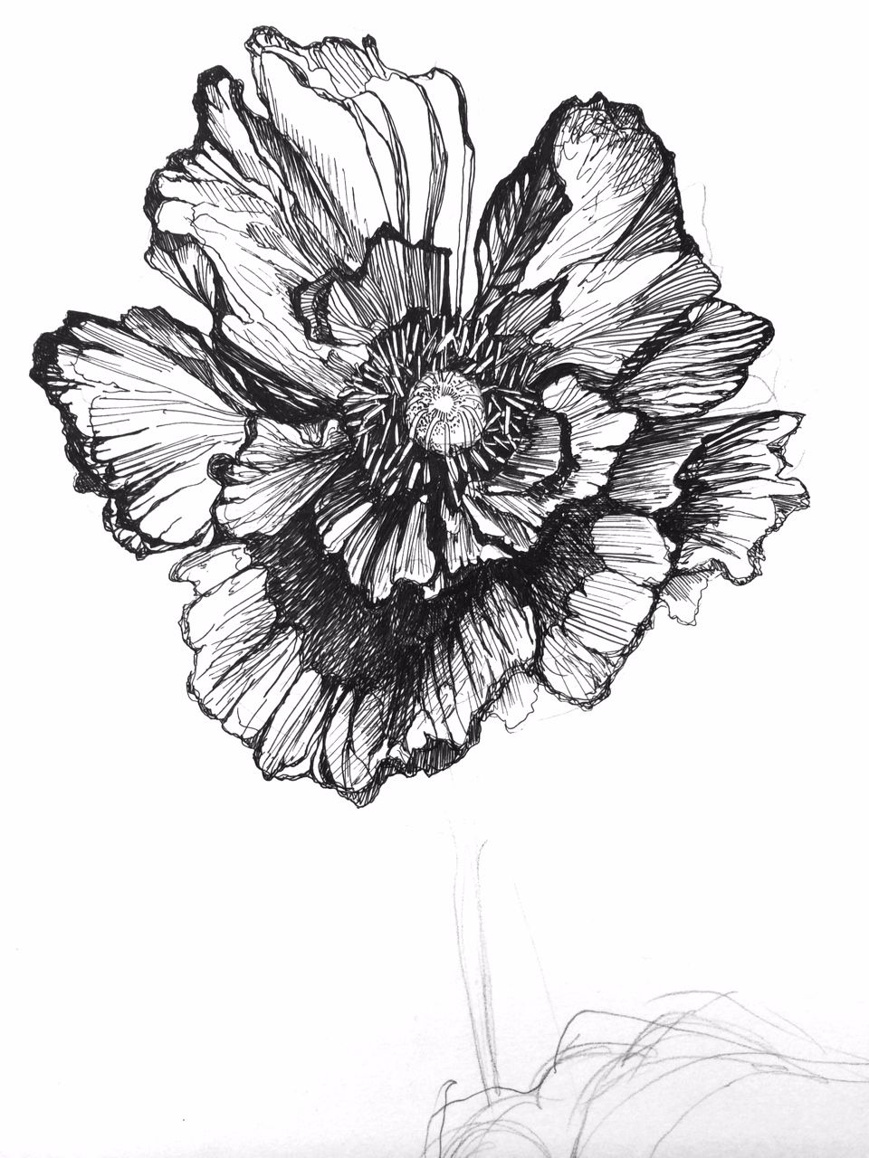 Poppy Illustration Black And White Pattern Print Textile Design