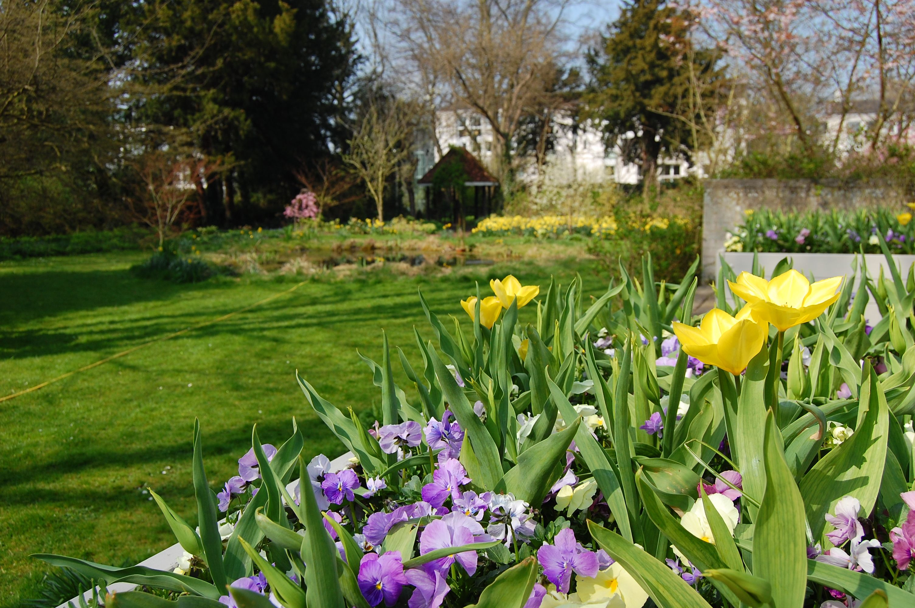 murray edwards college fellows garden featuring bedding plants and