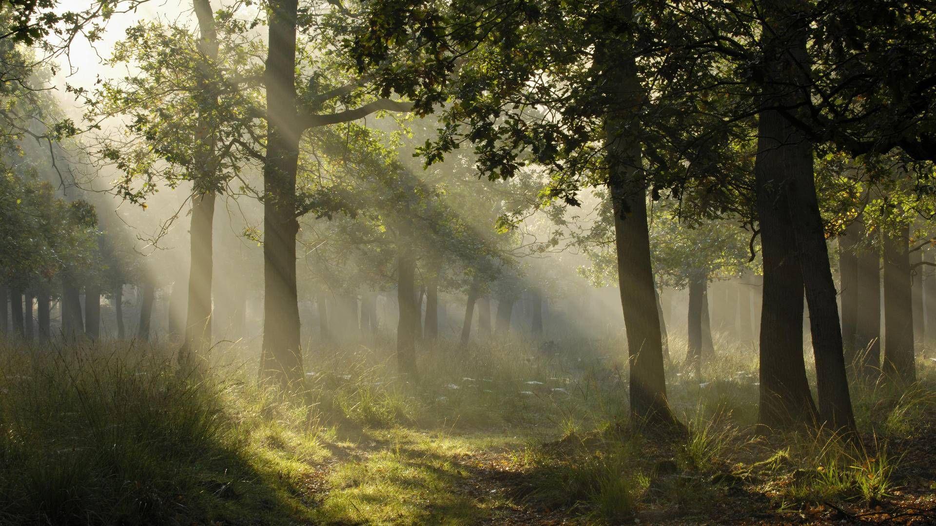 sunlight through trees black - photo #17