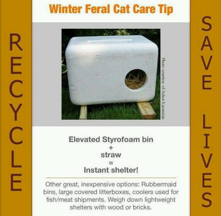 Instant shelter from a styrofoam cooler! If you have feral cats in ...