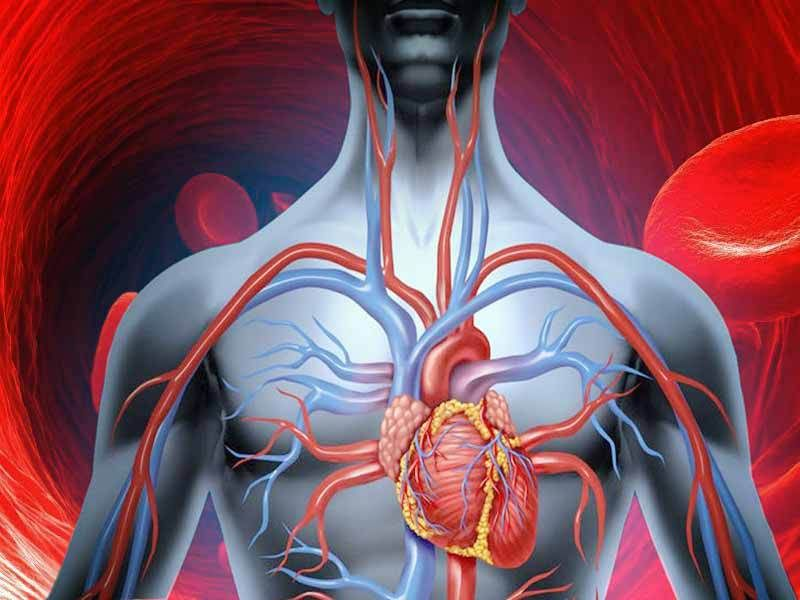 Guidelines for Improving Blood Circulation Improve blood