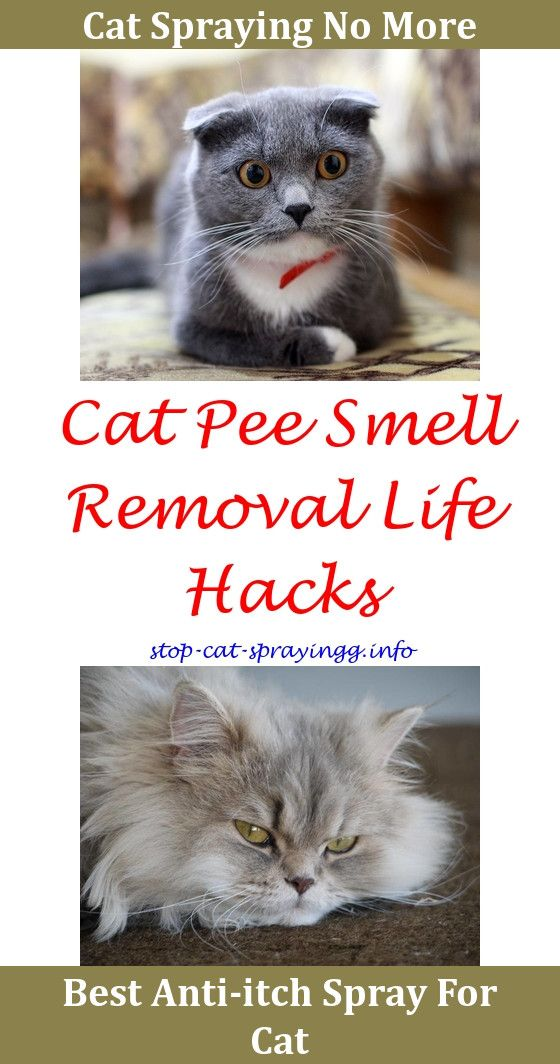 How To Keep Cats From Spraying Your Front Door Skunk Spray Cat