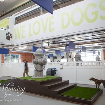 Petco Pooch Hotel Santa Monica Custom Play Structures Yelp Luxury Dog Kennels Dog Daycare Dog Playground