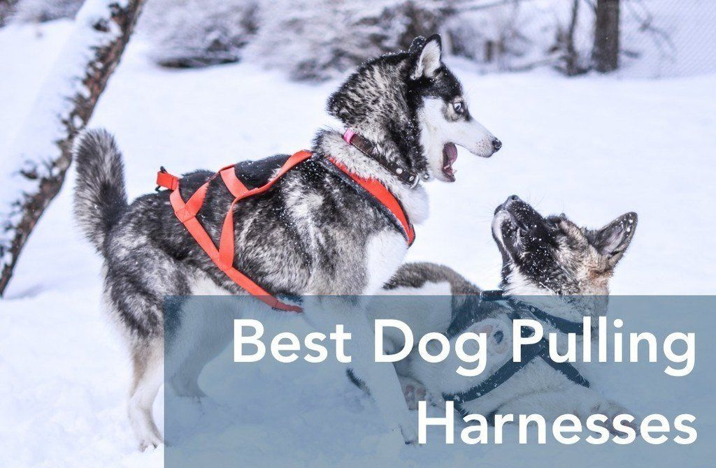 Top 7 Best Dog Pulling Harnesses 2021 Weight Pulling Sled Cart Joring Dog Pulling Harness Dog Harness Sled Dog Harness