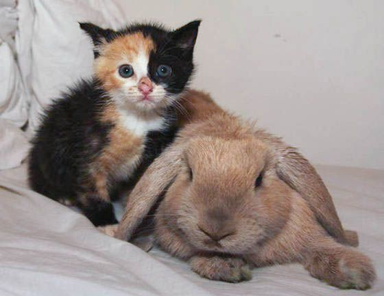 Orphan Kitten Adopted By Rabbit And Rescue Cat Baby Cats Unlikely Animal Friends Mama Cat