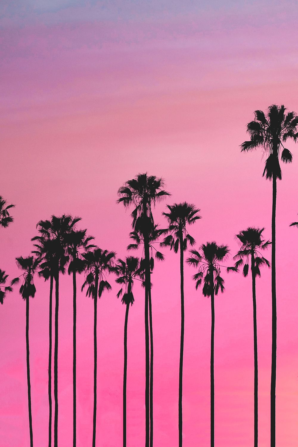 Soulmate24 Com Flakkabey Pink Sky Palm Trees P P Mens Style Tree Sunset Wallpaper Sunset Wallpaper Palm Trees Wallpaper