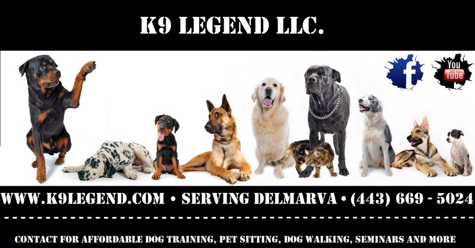 Salisbury, MD Dog Services Dog breed quiz, What kind of