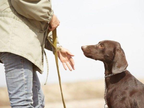 Hund Bestrafen Tipps Fur Die Hundeerziehung Hundeerziehung Hunde Erziehen Hunde